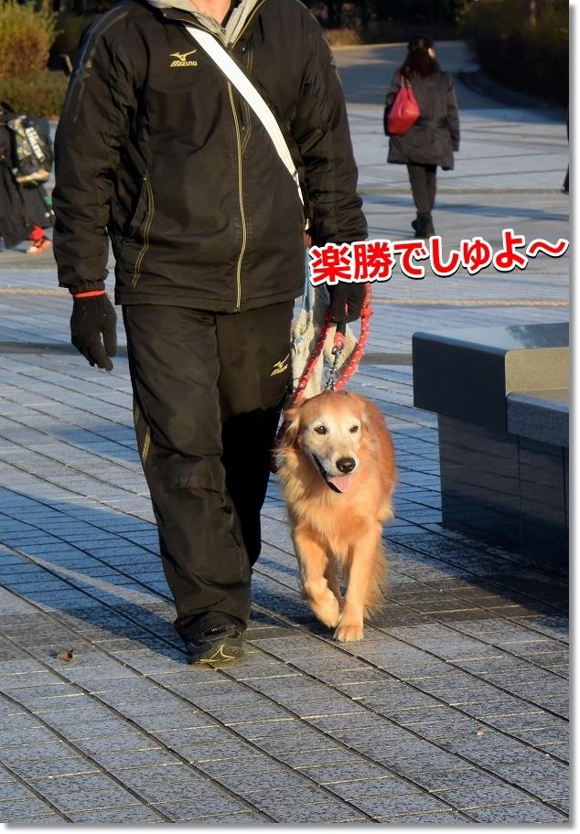 DSC_4941楽勝でしゅ