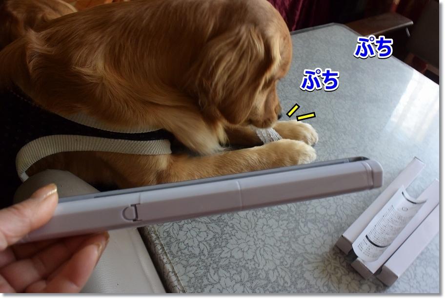 DSC_5363人感センサーライト