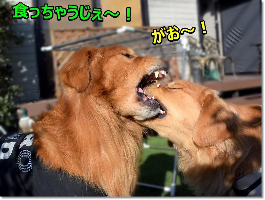 DSC_5403食べちゃうじぇ~