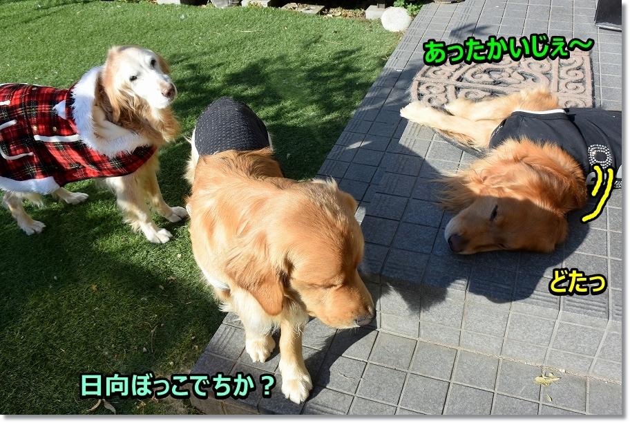 DSC_5417日向ぼっこ~ どて~