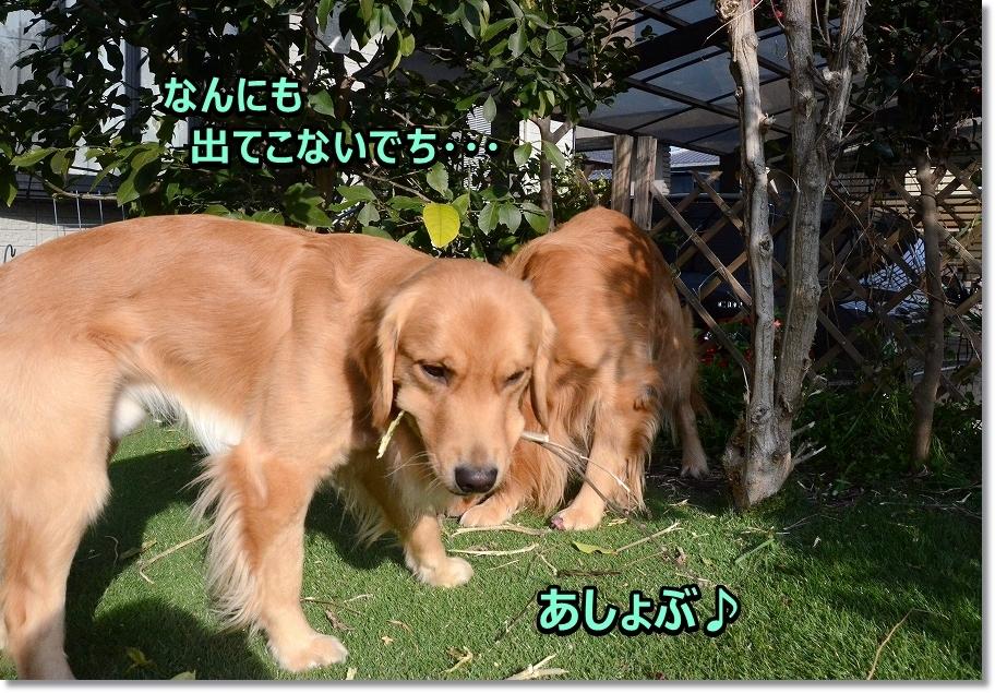 DSC_9557あしょぶ