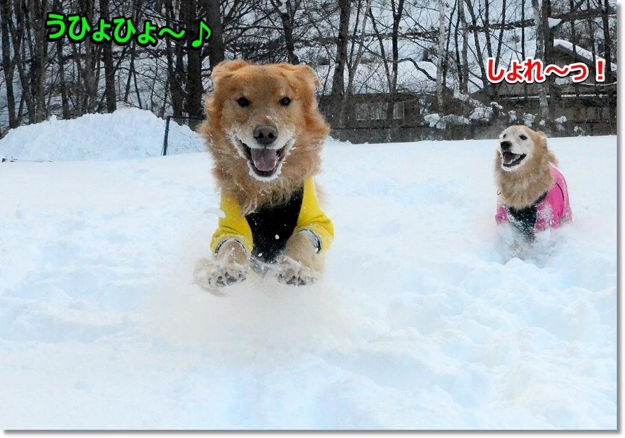 DSC_0729ぢょれ~♪