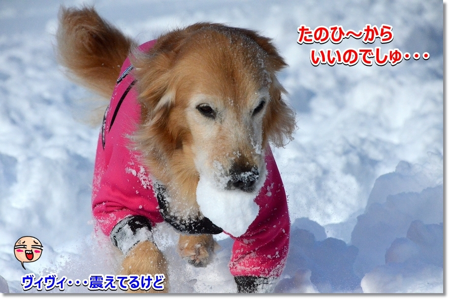 DSC_0771せっせ