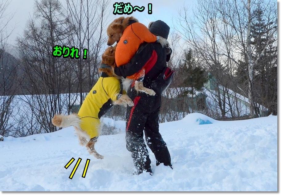 DSC_0800ダメ~おりれ~