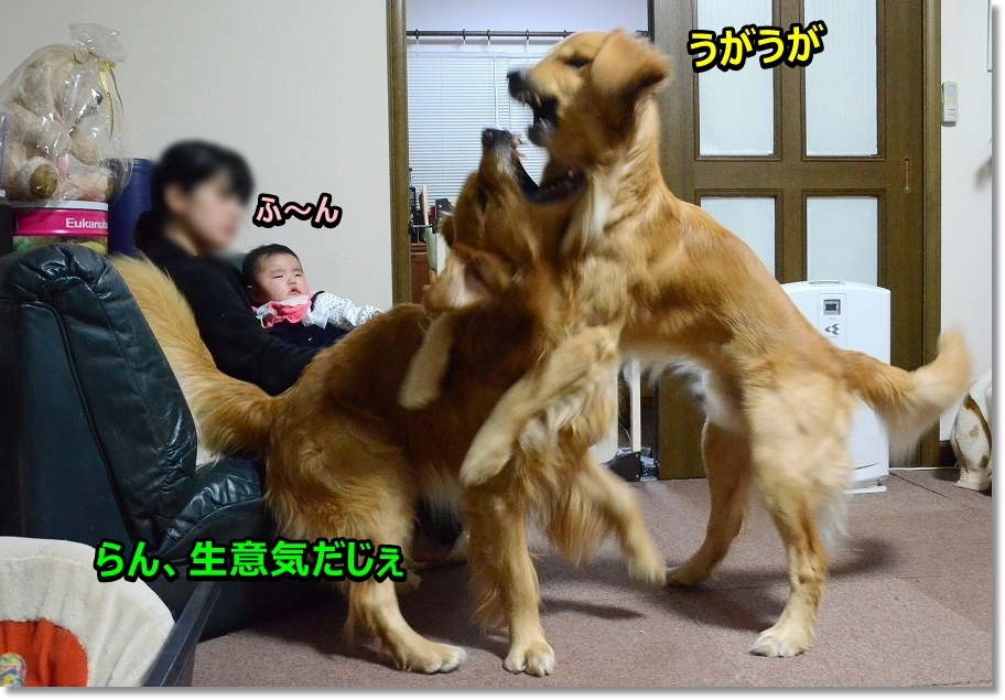 DSC_0177ほ~