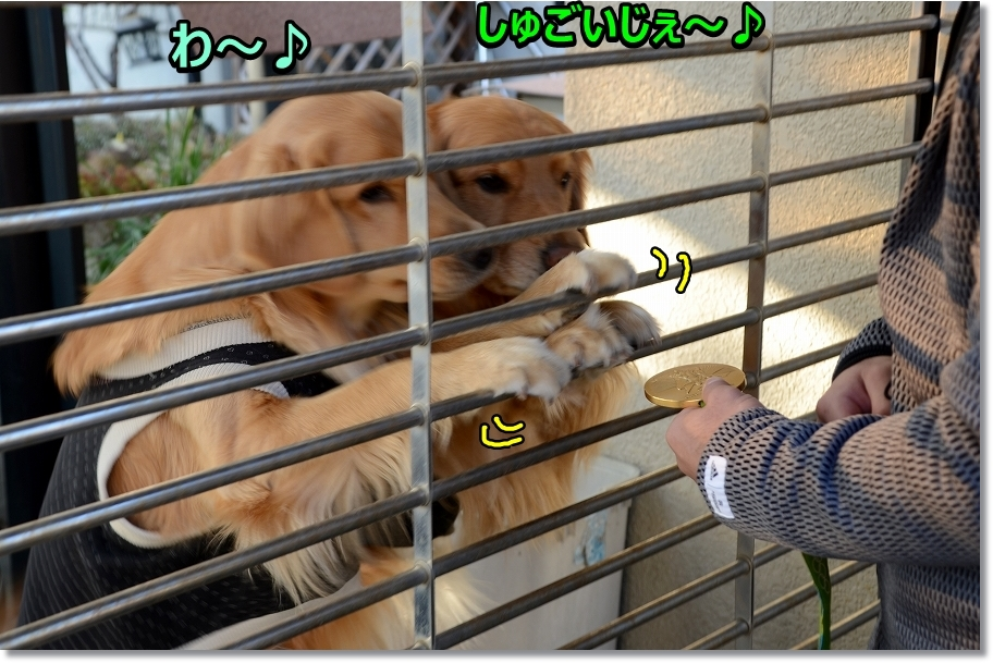 DSC_1127わ~しゅげ~