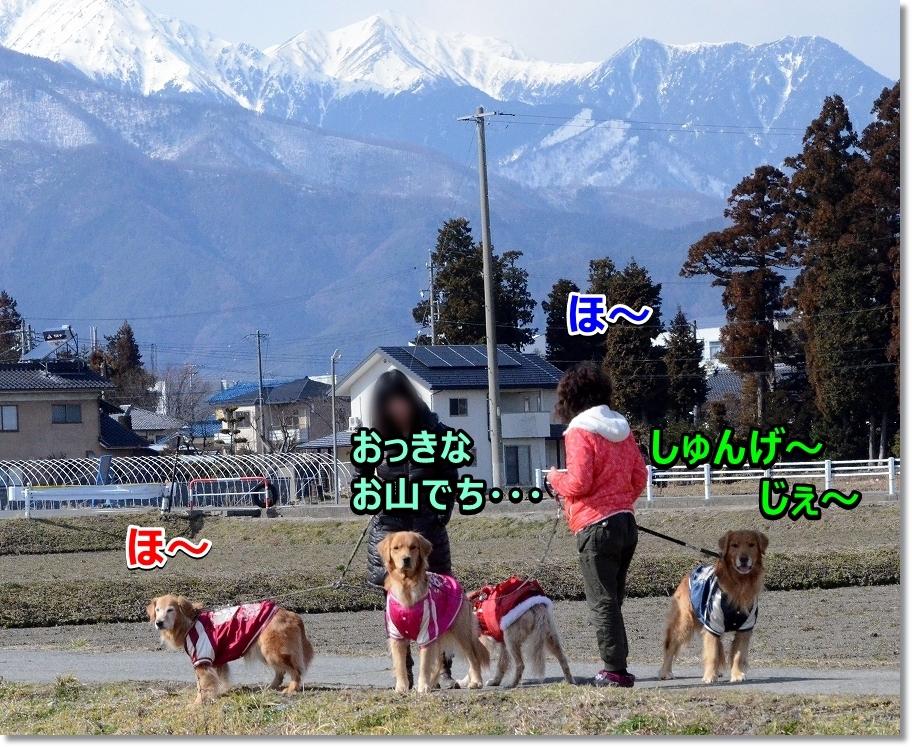 DSC_1383お散歩しゅんげ~ 目の前に山