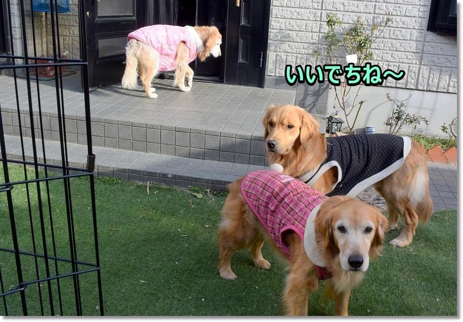 DSC_5993モっちゃん用