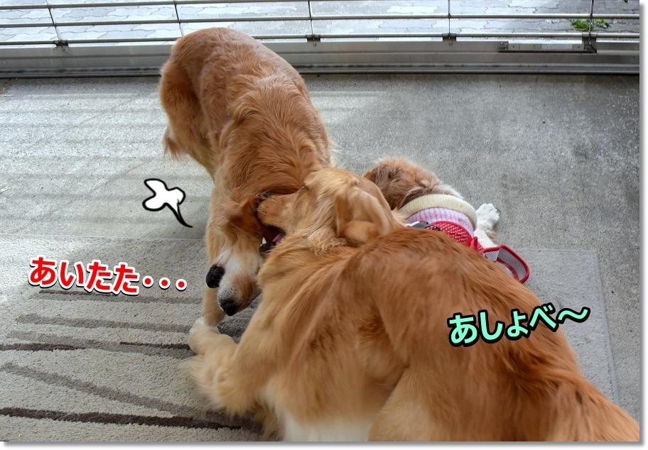 DSC_5596あしょべ