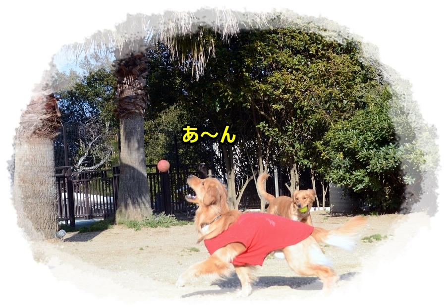 DSC_1701ボール好き