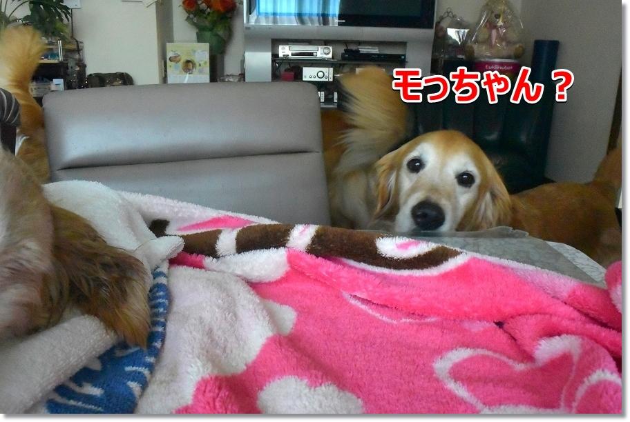 DSC_6913モっちゃん・・・