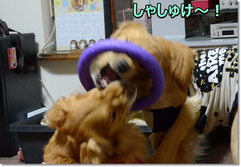 DSC_2269しゃしゅけ~
