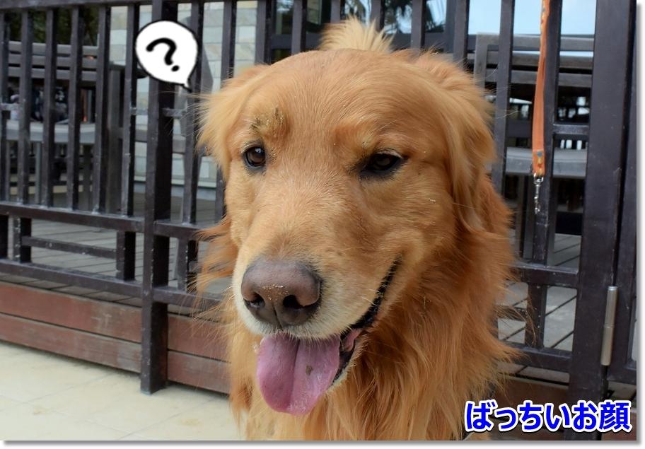 DSC_6095ばちい?