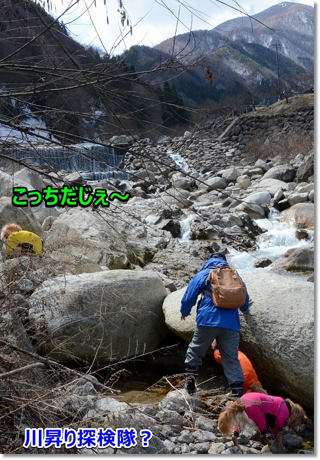 DSC_2523川昇り探検隊