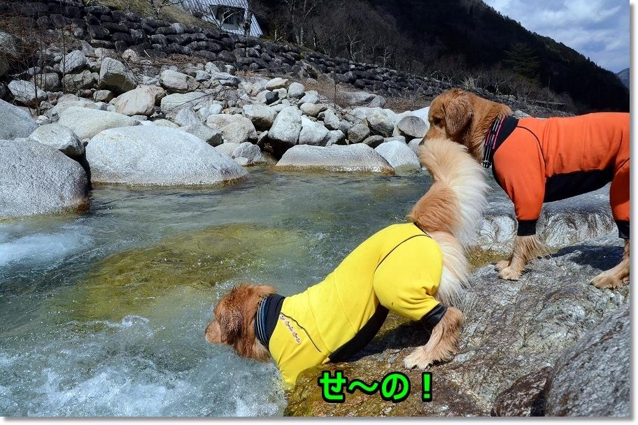 DSC_2556泳ぐじぇ