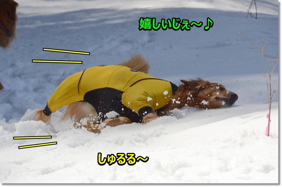 DSC_2640うれしいじぇ~ しゅるる