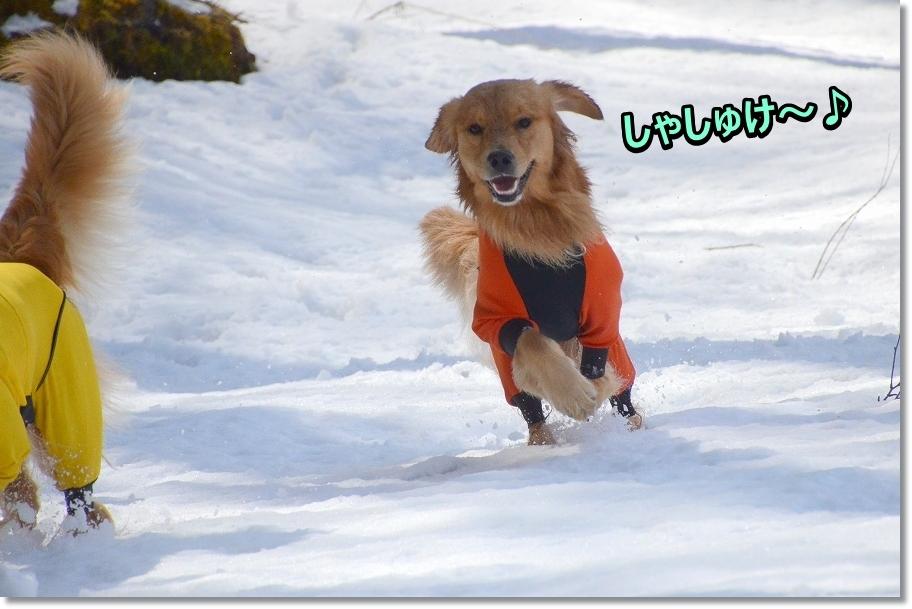 DSC_2682 しゃしゅけ~♪