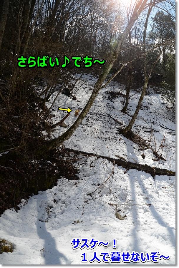 DSC_2689サスケ~