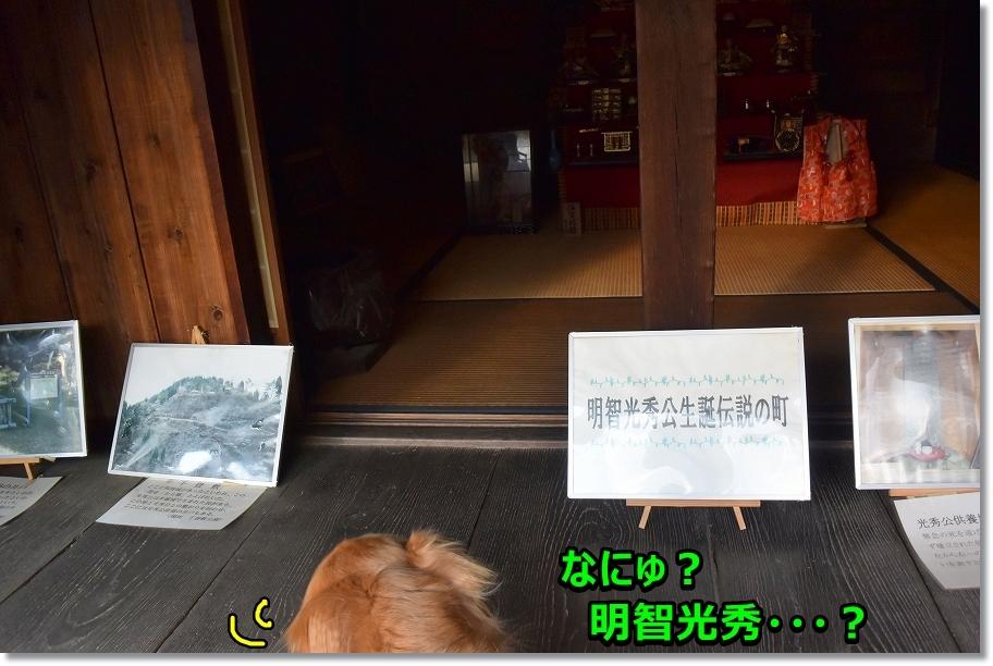 DSC_7039 ほぇ~