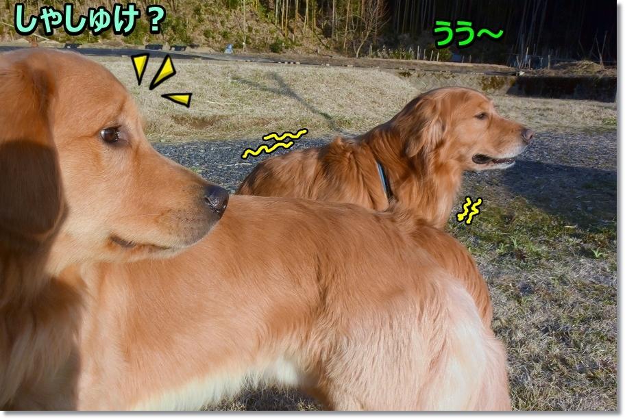 DSC_7079 しゃしゅけ?