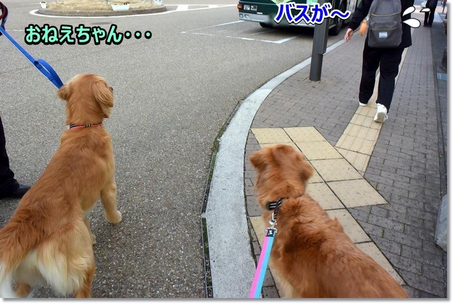 DSC_7100じゃ~ね~