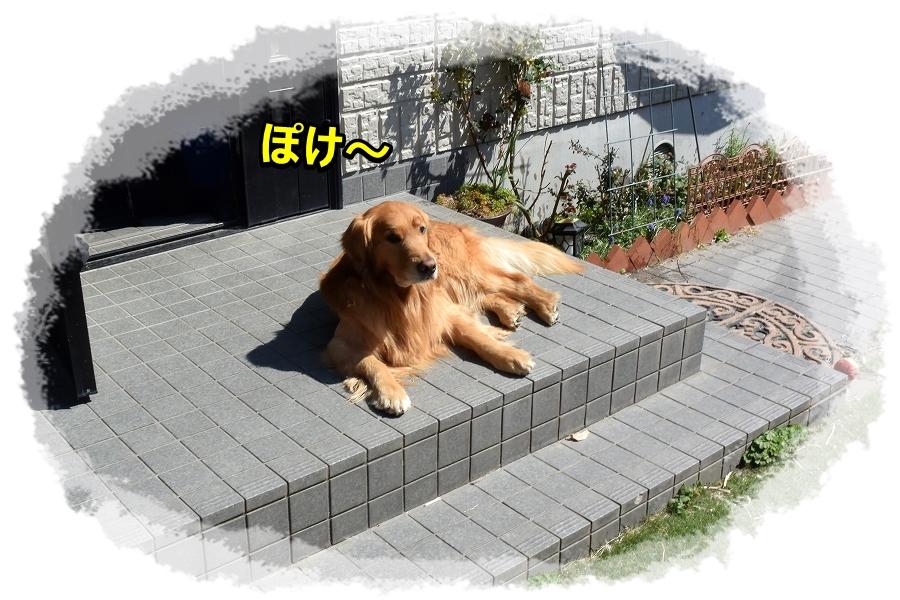 DSC_7154 ぼ~