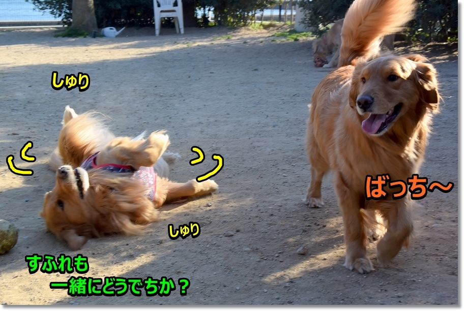 DSC_6210サスケばっち~