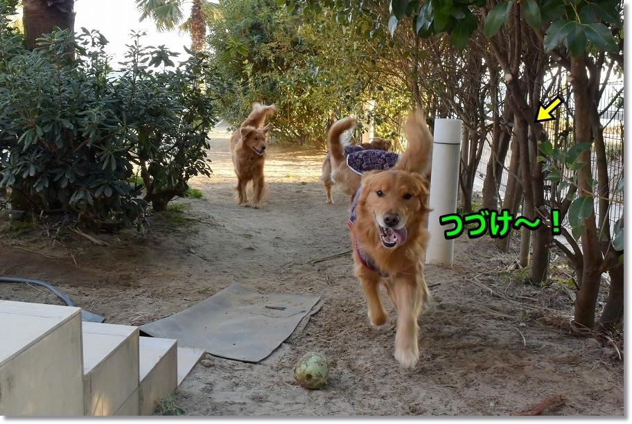 DSC_6282 つづけ~