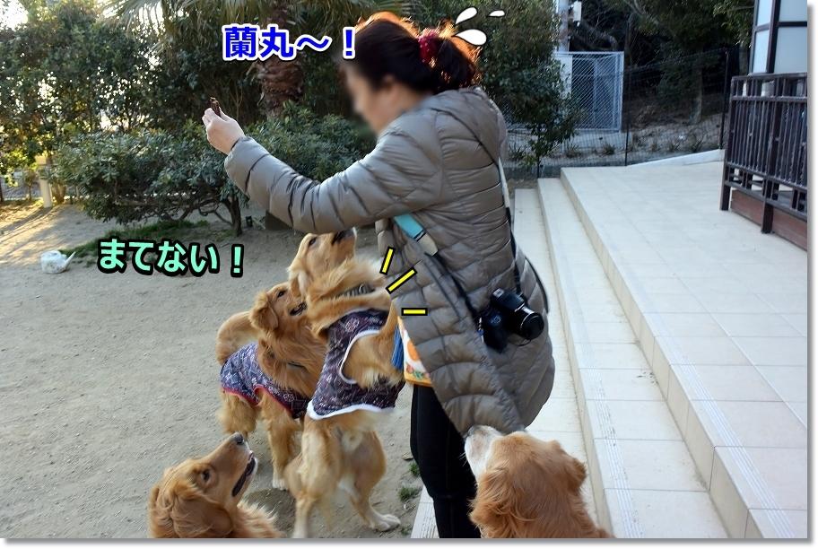 DSC_6328 らん!
