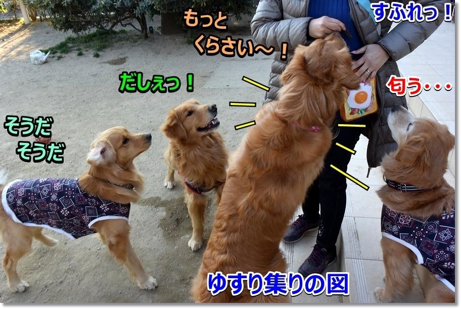 DSC_6337すふれ~