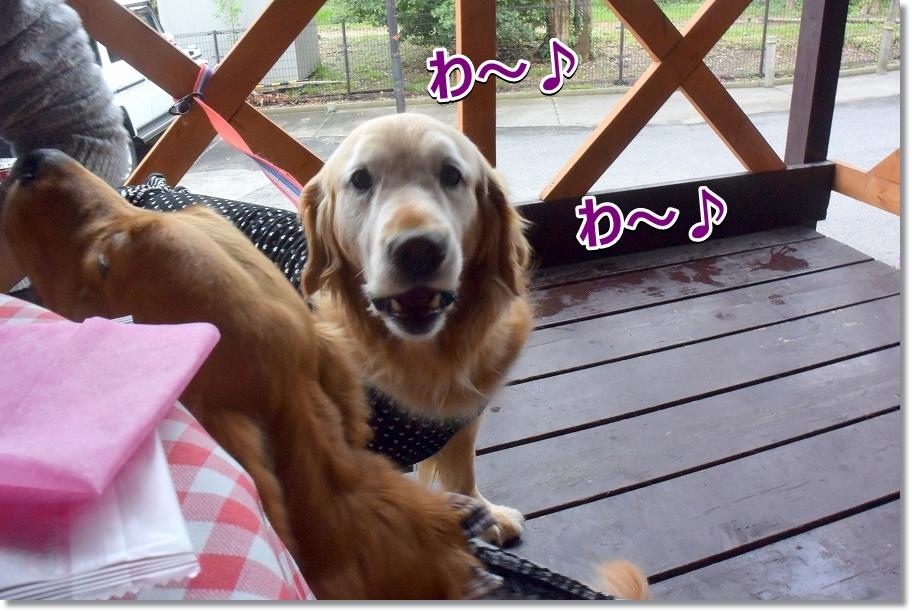 DSC_7246わ~