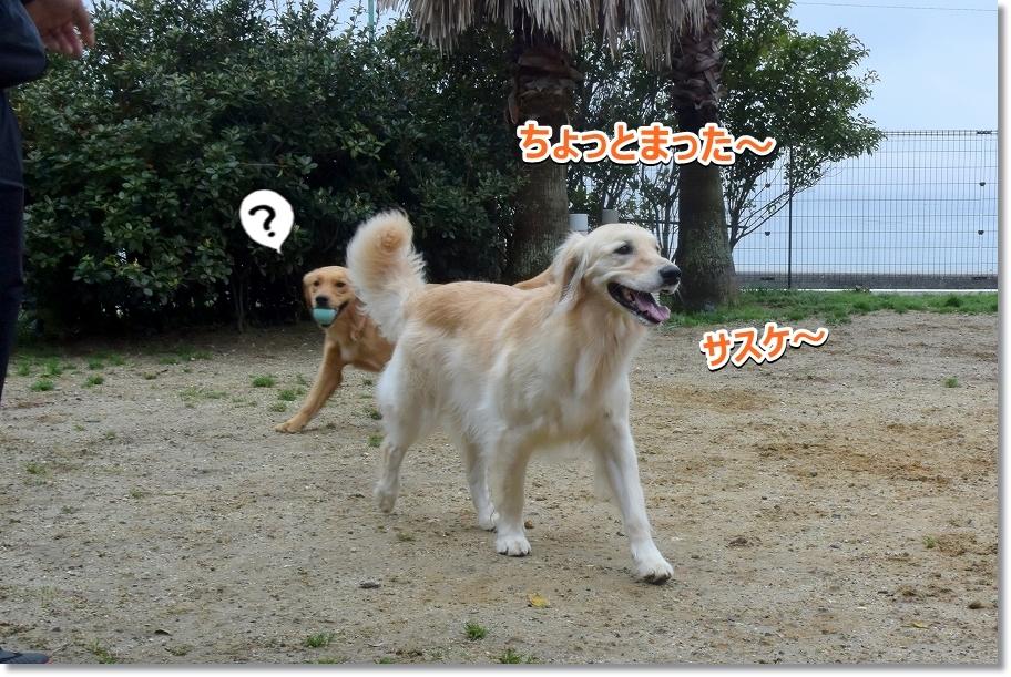 DSC_7279サスケ~
