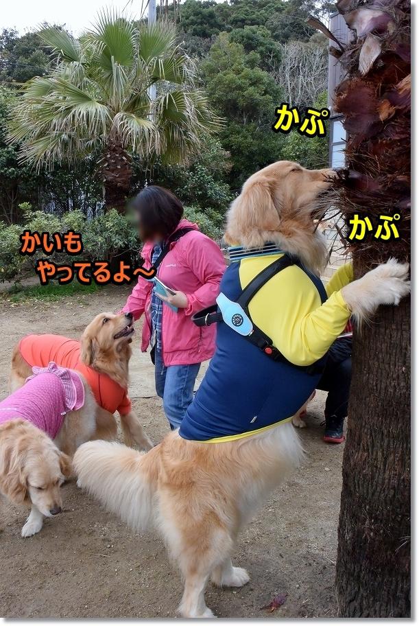DSC_7305 かぷ~