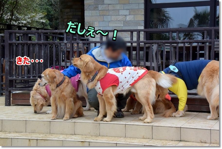 DSC_7360 だしぇ~ matakita