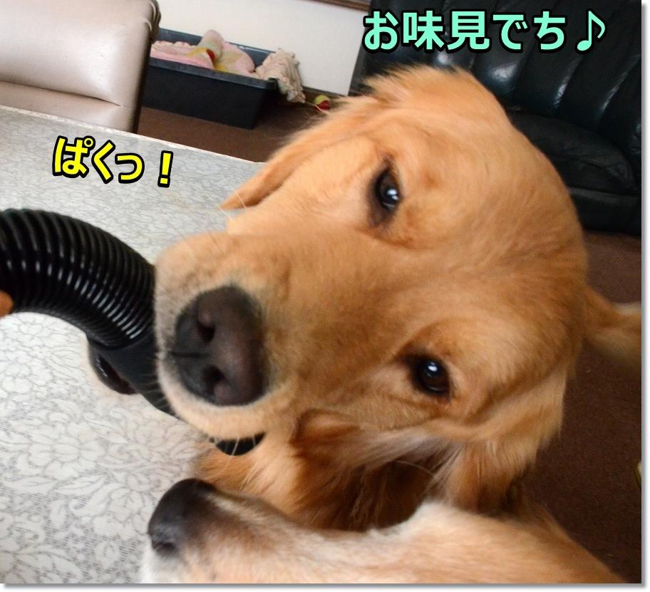 DSC_0565_20170305211622293.jpg
