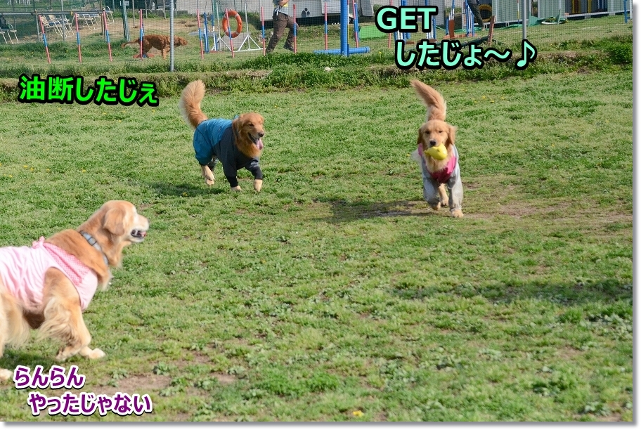 DSC_3186_20170428230558df4.jpg