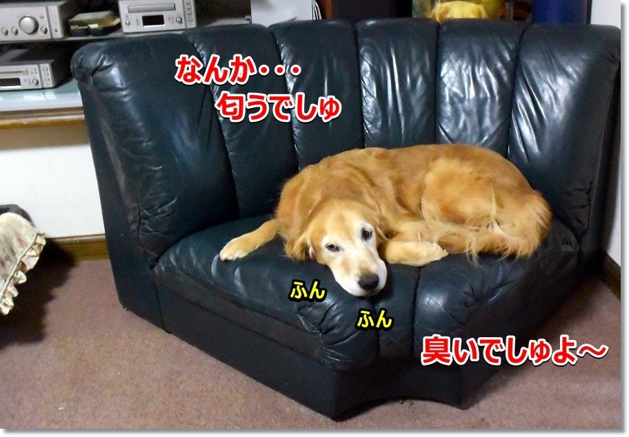 DSC_5491_20170320104239b1a.jpg