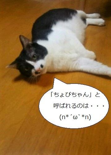 DSC_0727.jpg