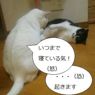 DSC_0870.jpg