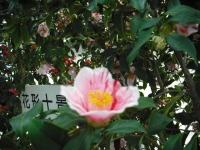 2017-02-27大船渡椿祭り038