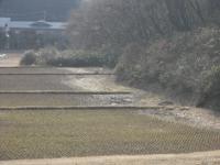 2017-03-03しろぷーうさぎ03