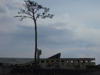 2017-02-26陸前高田市奇跡の一本松053