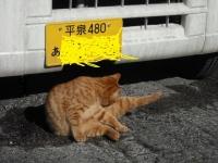 2017-04-02しろぷーうさぎ05