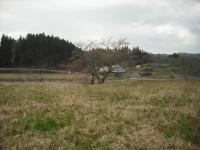 2017-04-15しろぷーうさぎ07