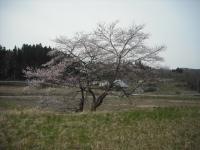 2017-04-17しろぷーうさぎ09