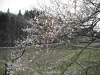 2017-04-17しろぷーうさぎ18