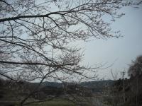 2017-04-17しろぷーうさぎ14