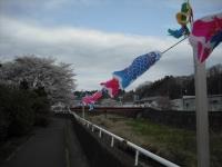 2017-04-21しろぷーうさぎ鯉06