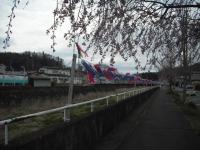 2017-04-21しろぷーうさぎ鯉14
