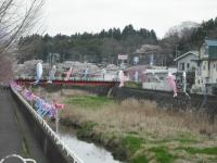 2017-04-21しろぷーうさぎ鯉29